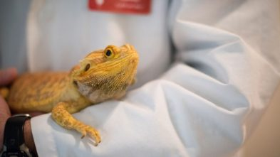 how to get the most out of your vet appointment with your bearded dragon