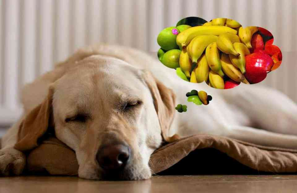 Dog dreaming about apples and bananas