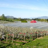 applebarn-orchard-600x400