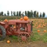 pumpkins-tractor-2015-600x400