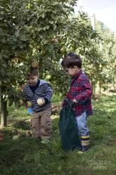 Orchard1 (1)