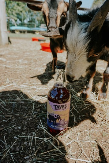 Goaterdays! - goat at Taves Estate Cidery