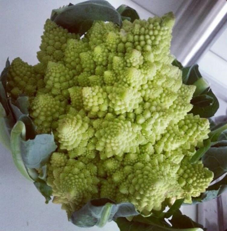 roccoli e Arzilla - Broccolo 2