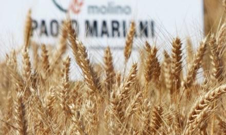 Molino Paolo Mariani, Main Sponsor Maritozzo Day 2018
