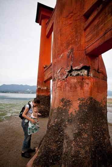 torii gate 2