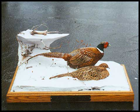 Gallery of Wildlife Art Frank Newmyers Pheasants