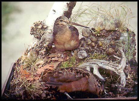 Gallery of Wildlife Art Frank Newmyers Woodcocks