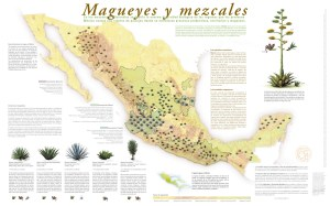 distribución de Magueyes en México