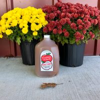 1 gallon carton of Woodstock Orchards cider in front of yellow nad red mums