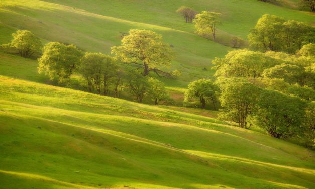 The greening of my life – and results to date.