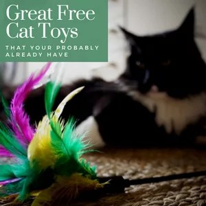 Great Free Cat Toys you probably already have