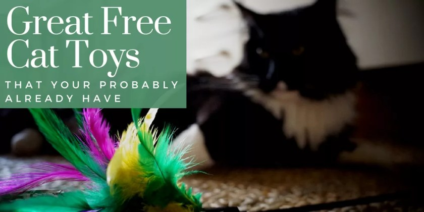 great free cat toys you probably already have taylorlife
