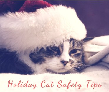 Holiday cat safety tips