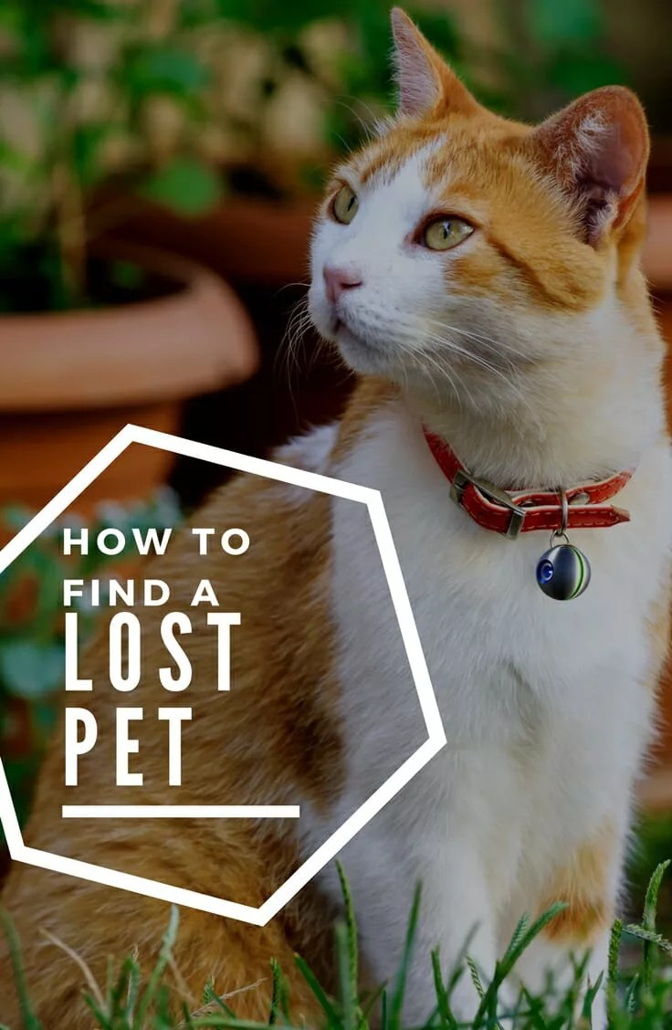 How to find a lost pet. Several steps to help reunite you with your missing fur baby, and how to plan for the emergency.