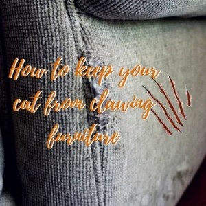 5 Ways to stop your cat from clawing your furniture