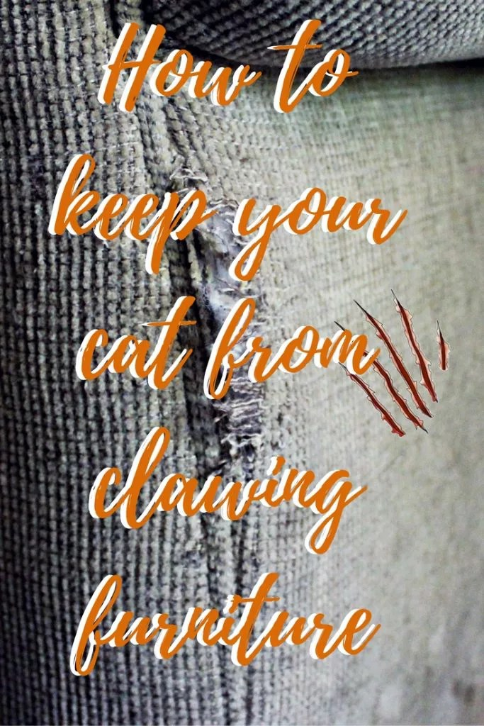 Prevent furniture damage and discourage cat clawing with these five simple and effective cat training tips.