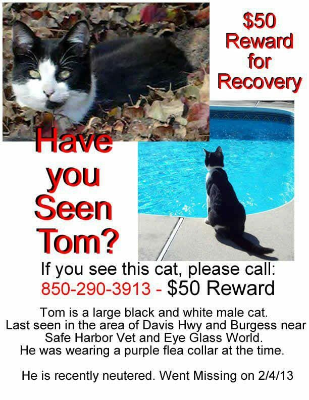 Tom Kitty Lost Pet Poster