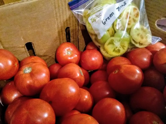 Partial box of tomatoes and green tomatoes. I used some of the red ones to make this Summer Vegetable Stew.