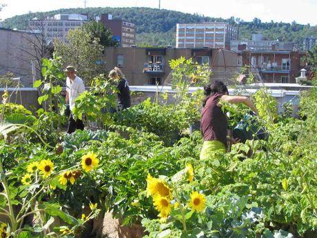 rooftop garden Montreal Gazette