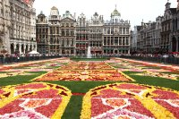 Taylors Coach Travel | Brusssels  Carpet of Flowers