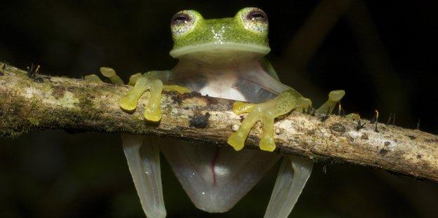 Der Frosch besticht durch filigrane Anmut und ausufernde Wortgewalt