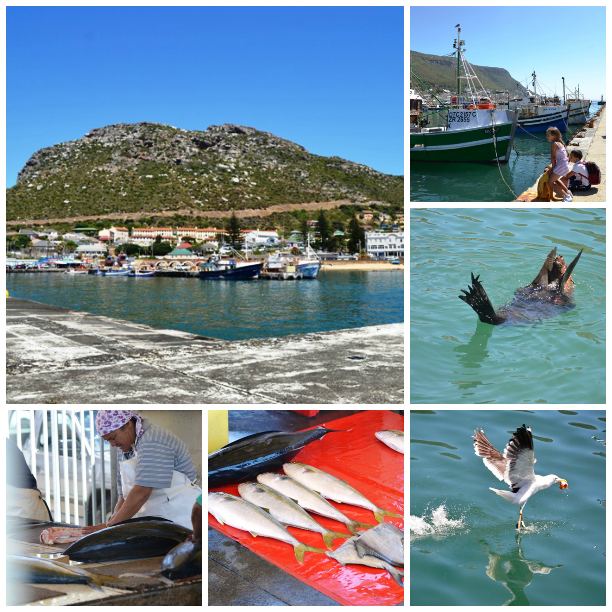 road trip, cape peninsula, cape town, explore, kid friendly, trips, kalk bay harbour, slangkop lighthouse, imhoff farm, hout bay, noordhoek, cape point ostrich farm, cape point, south africa, tami magnin, anton magnin
