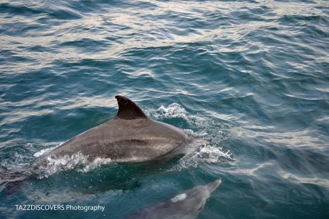raggy charters, whale watching, boat, things to do, port elizabeth, bottlenose dolphins, penguins, cape gannets, family, travel, south africa, road trip, kid friendly