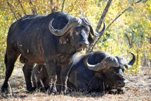 mpumalanga, kid friendly, itinerary, road trip, hazyview, God's Window, Blyde River Canyon, Mac Mac Falls, things to do, Kruger National Park, travel, South Africa, family