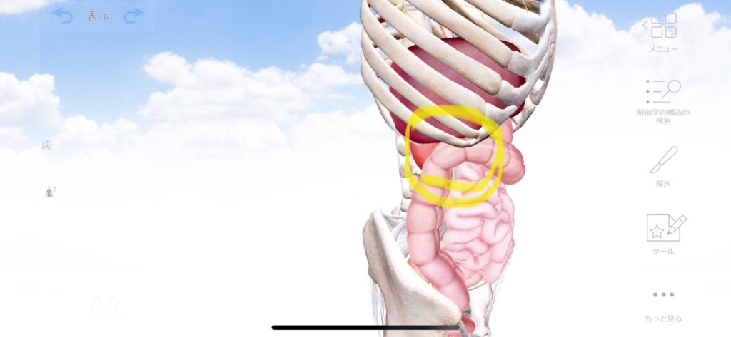 右上腹部の張りと右腰の張りの原因は | 【大阪・梅田の整體】腸もみ 首痛や背中痛,腰痛,肩こり ...