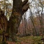 Abgesang des Herbstes im Hasbruch