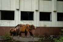 Tschernobyl 2017-36