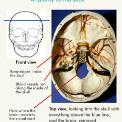 Inside Skull Diagram Wiring Reversing Circuit Tbi Staff Training Self Study Module 1 An Introduction To 3 Describe The Basic Anatomy Of And Brain