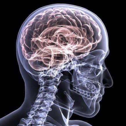 How a Brain Injury Tells The Body it is Hurt
