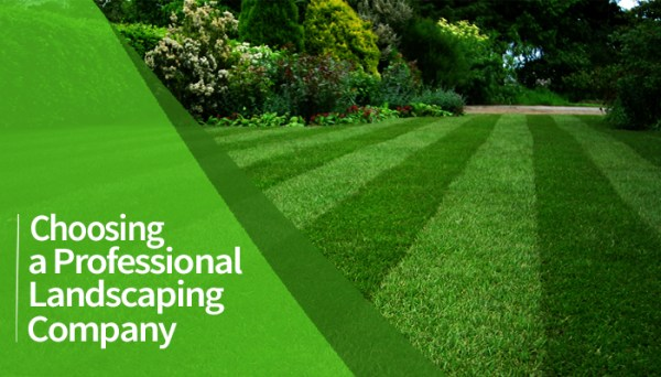 choosing professional landscaping