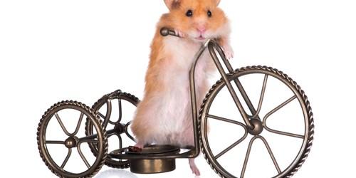 Pet Adoption | Animal Rescue | Pets and Animals