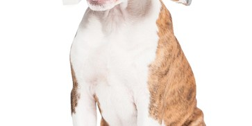Pinellas County Animal Services | Animal Shelter | Pet Adoption