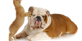 Pets and Animals | Cats | Dogs