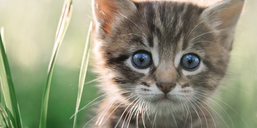 Cats | Feral Cats | Meow Now