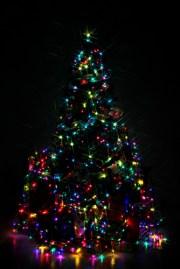 St. Pete's Christmas Tree Will Shine Tonight