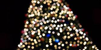 Christmas Tree   Tree Lighting   Holiday Tree