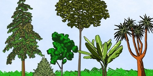 Florida's Arbor Day | Trees | Tree