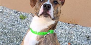 Pet Adoption | Homeless Pets | Animal Services