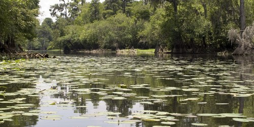 Kayak   Hillsborough River   Canoe