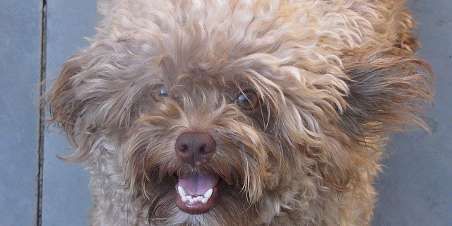 Dog | Animal Services | Pets