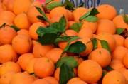 Weekly Farmers Market Opens in Brooksville