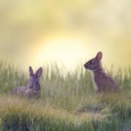 Marsh Rabbits | Bunnies | Animals