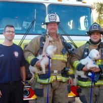 Big Bend Animal Hospital   Hillsborough Fire Rescue   Fire