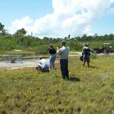 Bobcat Release | Hillsborough County | Upper Tampa Bay Regional Park