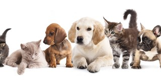 Animals | Pets | Dogs and Cats