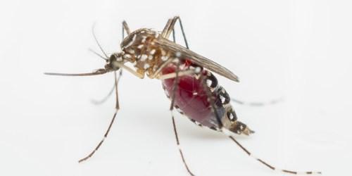 Zika | Mosquito | Disease